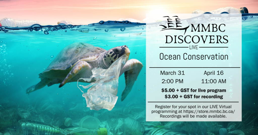 Image of a turtle with a plastic bag in its mouth and swimming in water with garbage on the top.